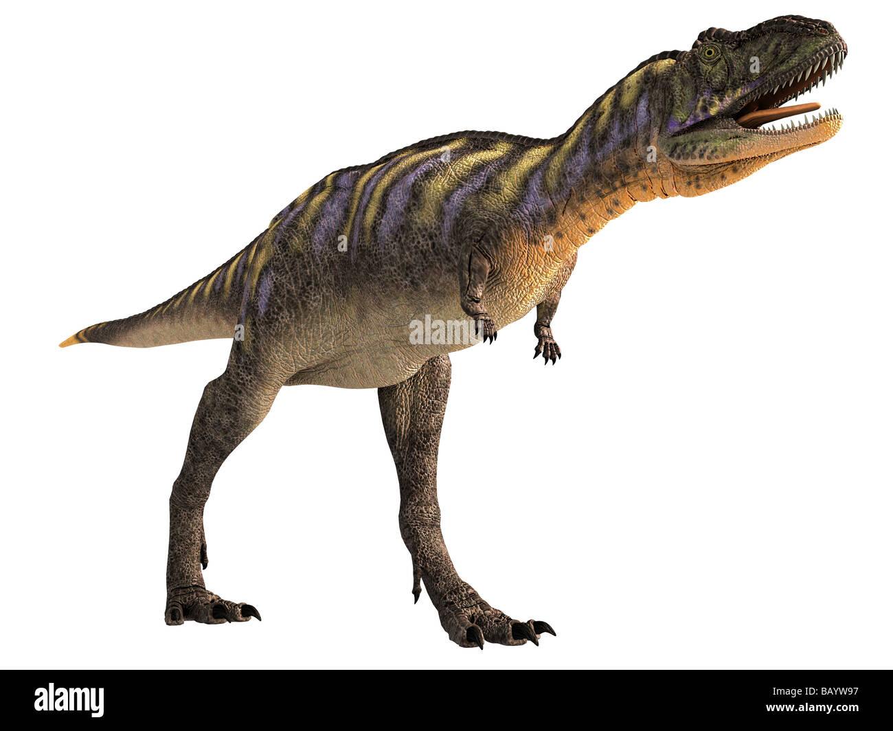 Aucasaurus garridoi es un abelisaurid desde Argentina, a fines del período Cretácico. Imagen De Stock