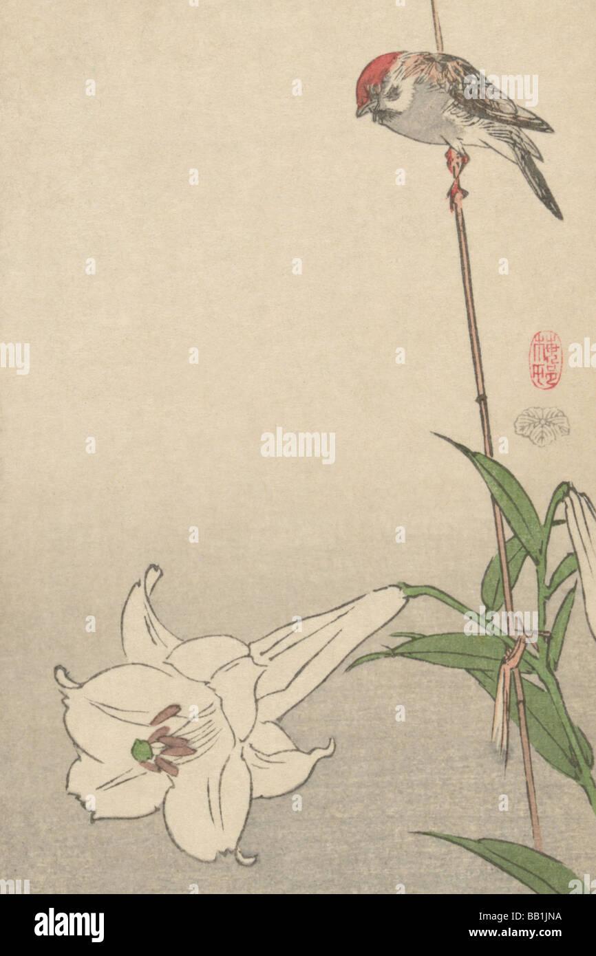 Pequeño pájaro sobre la planta lirio. Imagen De Stock