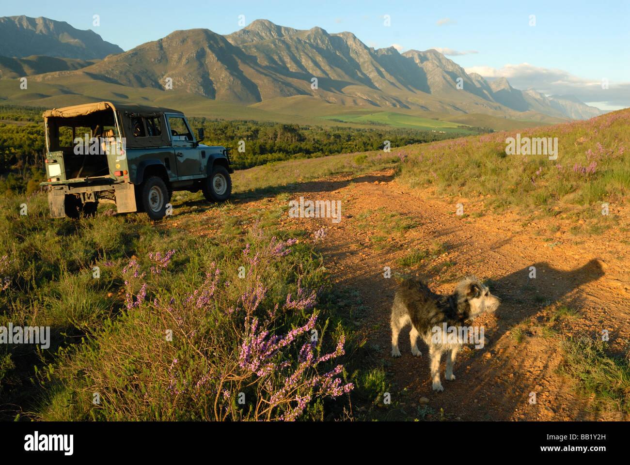 La vida al aire libre con el perro y 4x4 en la primavera, montañas, Riviersonderend Overberg, Western Cape, Sudáfrica Foto de stock