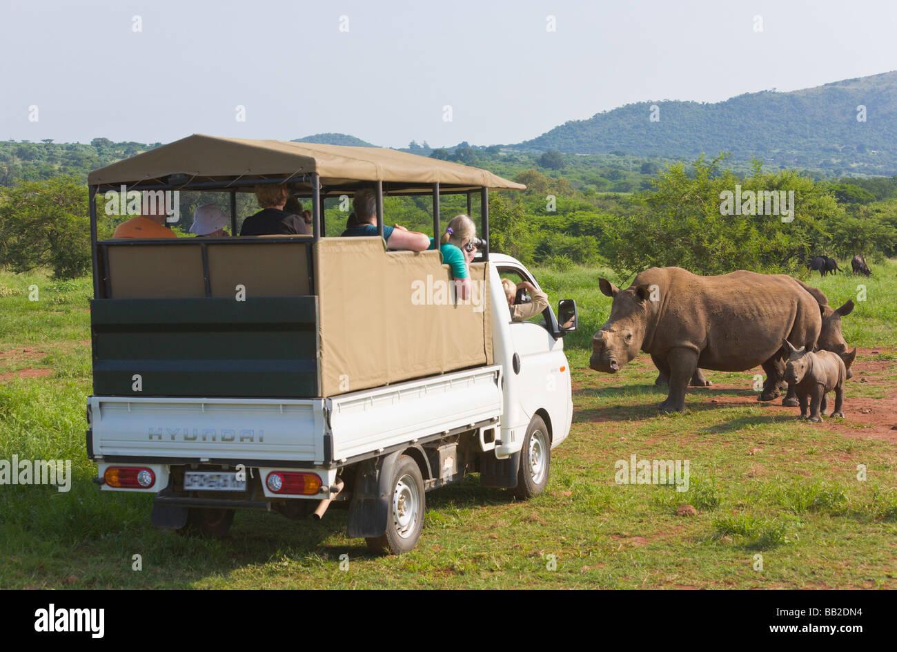 """Vehículo de safari, el rinoceronte blanco Ceratotherium simum, privada de """"reserva de caza"""", """"Sudáfrica"""" Imagen De Stock"""