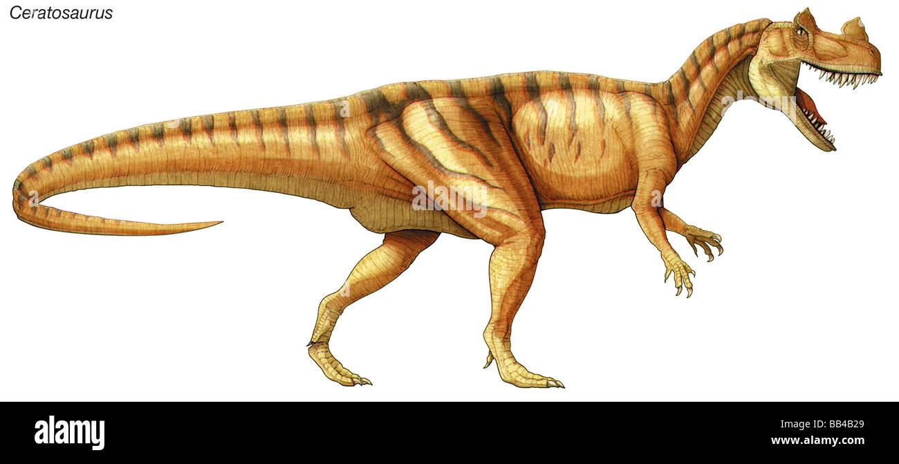 Ceratosaurus, finales del Jurásico dinosaurio, un gran predador con hoja-como ventiladores para comer carne. Imagen De Stock