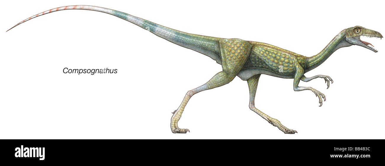 Compsognathus, dinosaurio del Jurásico tardío. Un depredador ágil y rápido, es uno de los más Imagen De Stock