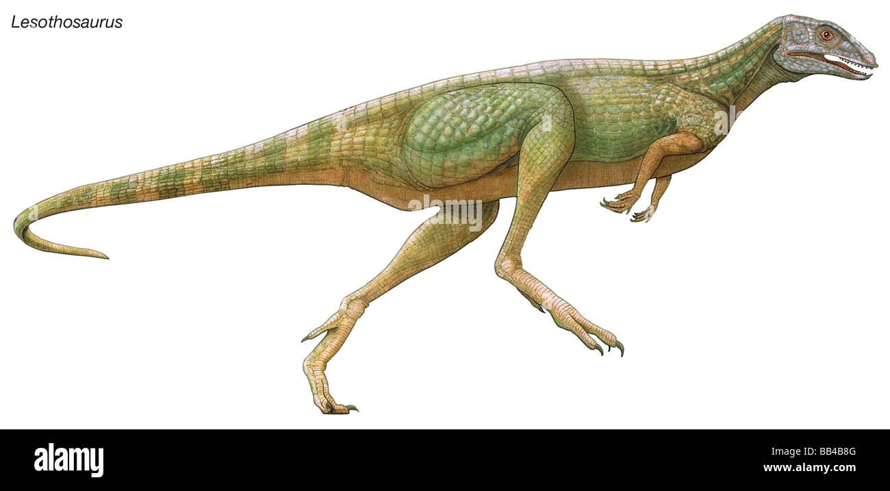 Lesothosaurus, Lesotho,' 'lagarto dinosaurio del Jurásico Temprano. Este pequeño herbívoro Imagen De Stock