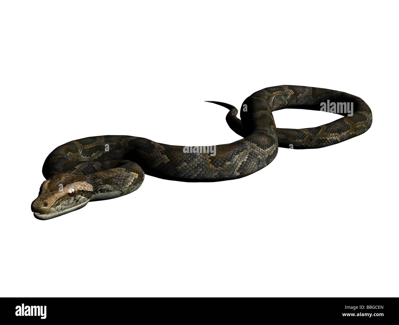 Ilustración 3D de python Imagen De Stock