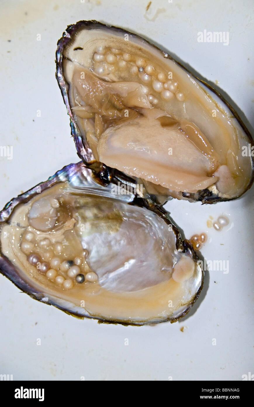 Geografía / viajes, China, Pekín, la fabricación de perlas, mejillón, perlas, perlas de cultivo, Imagen De Stock