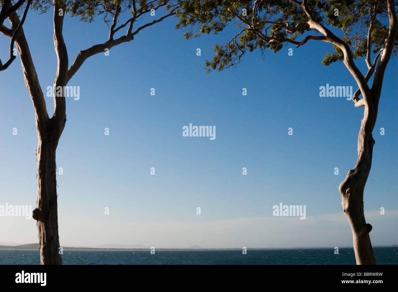 Dos árboles de eucalipto enmarcando el océano y un cielo azul claro. Imagen De Stock