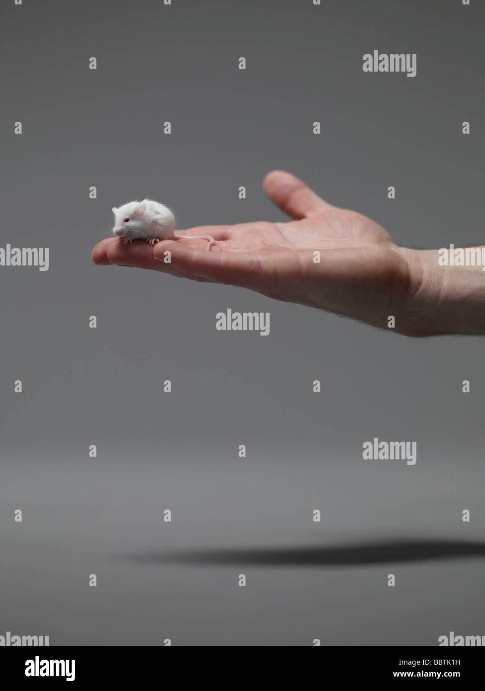 Ratón sentado en la mano del hombre Imagen De Stock