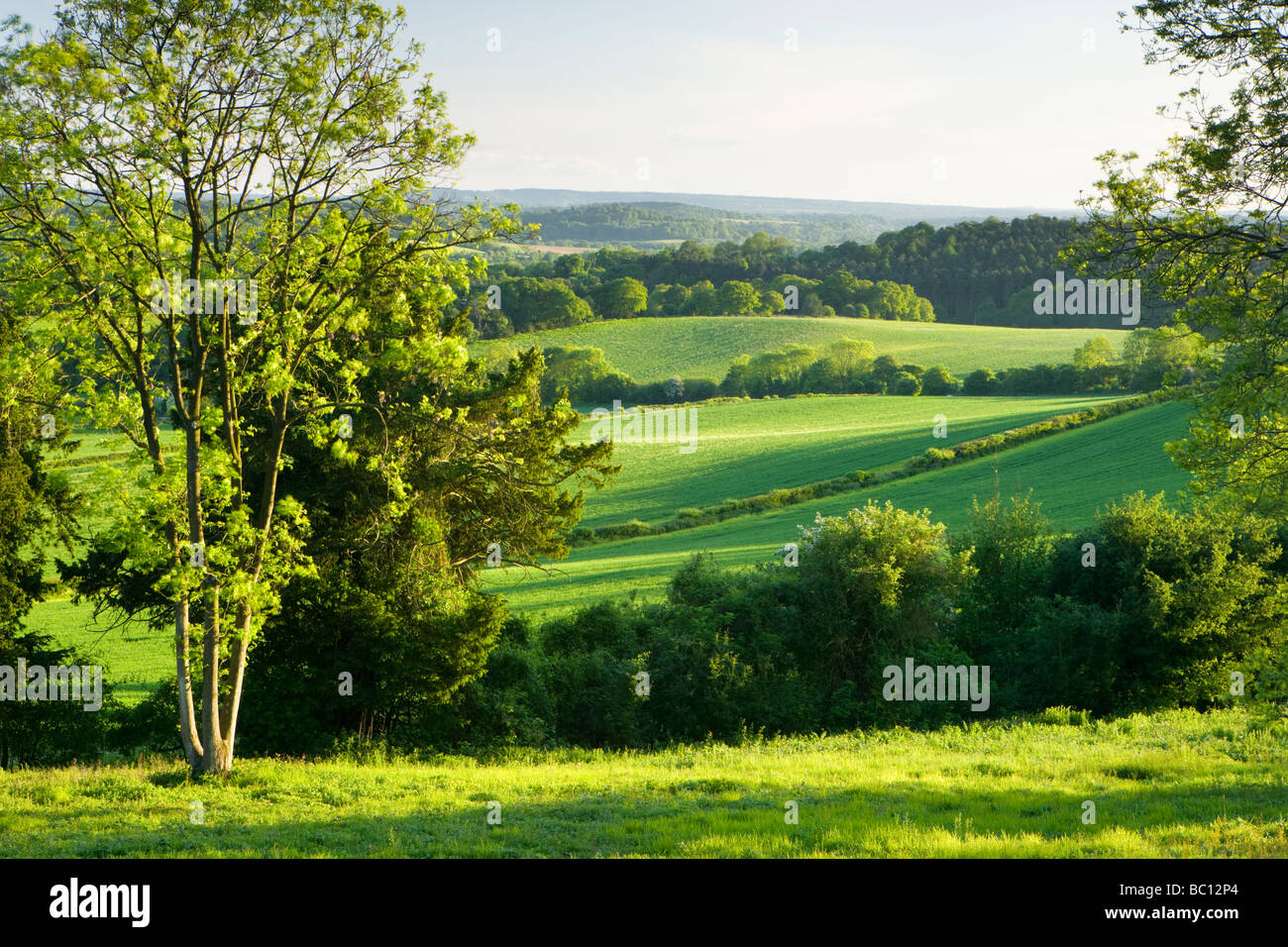 Vista hacia el sur desde North Downs en Newlands Corner, Surrey, Reino Unido Foto de stock