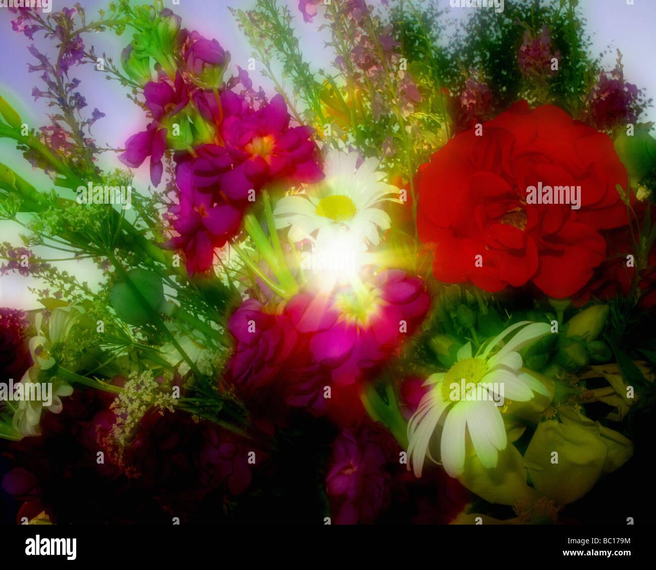 Arreglos florales: Flores de verano Imagen De Stock