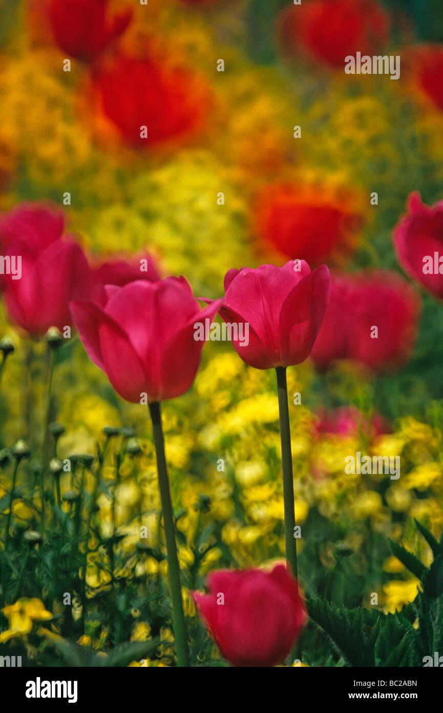 Cerca de las flores en el jardín de Claude Monet en Giverny en ...