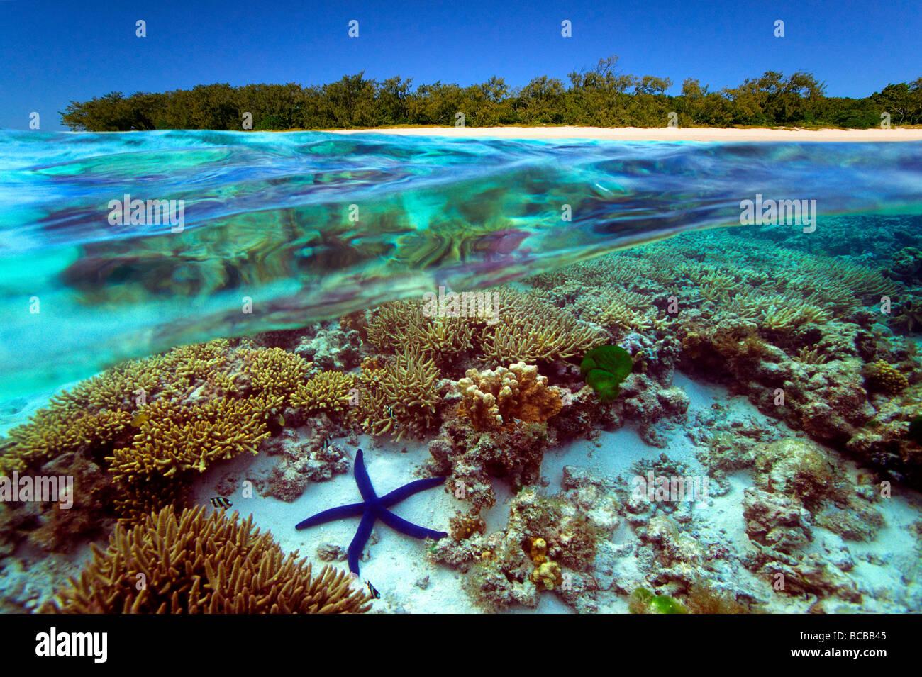 Vista submarina de la Gran Barrera de Coral de Australia Foto de stock