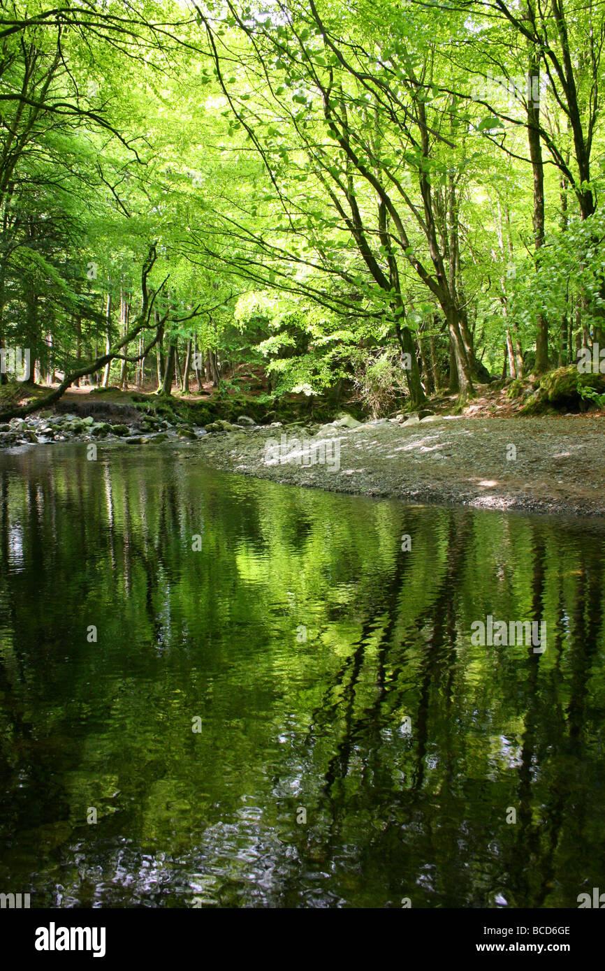 Th Shimna río que fluye suavemente entre los árboles en Tollymore Park, Condado de Down, Irlanda del Norte Foto de stock