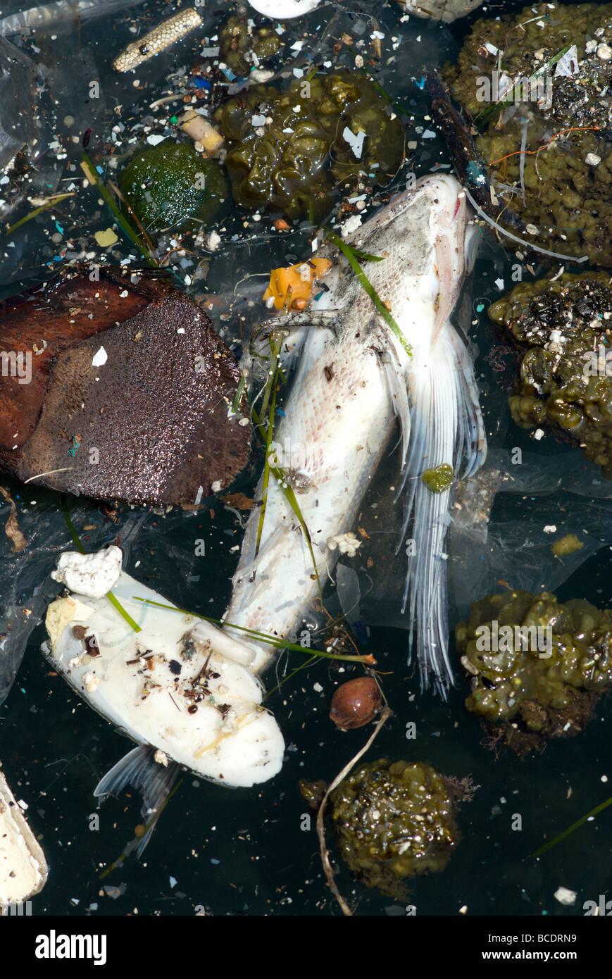 Contaminación del mar Imagen De Stock