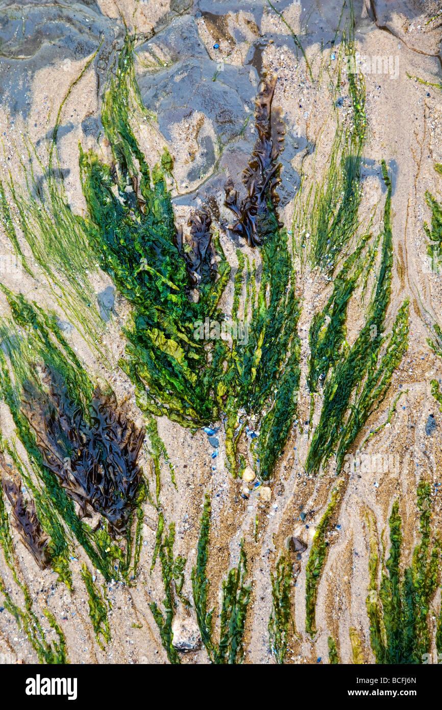 Patrones de algas en la arena de Saltburn por el mar Imagen De Stock