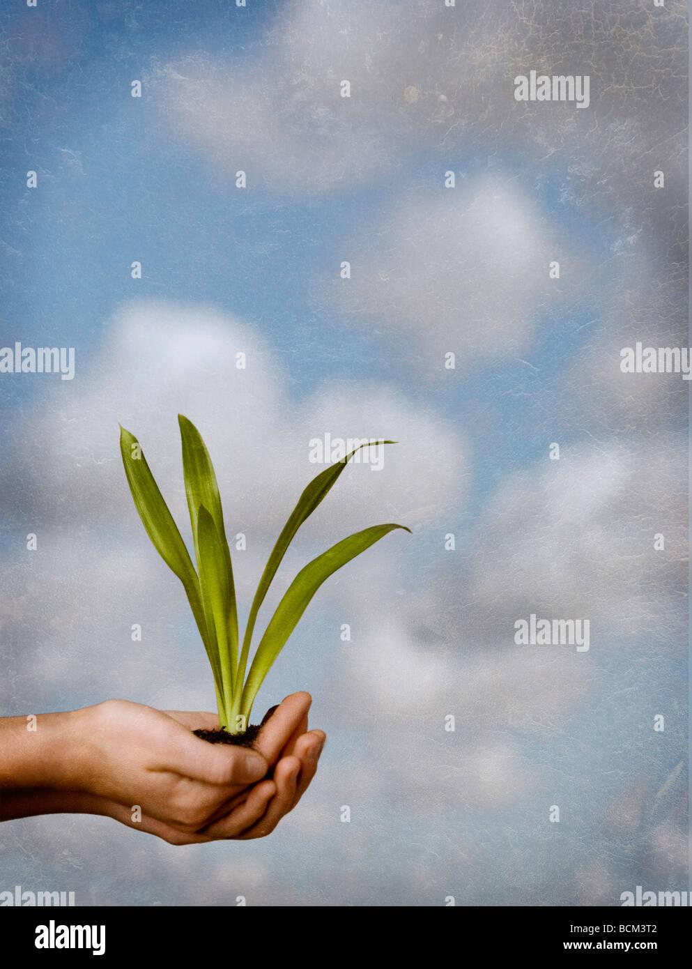Manos sosteniendo el suelo y la planta contra un telón de fondo del cielo Imagen De Stock