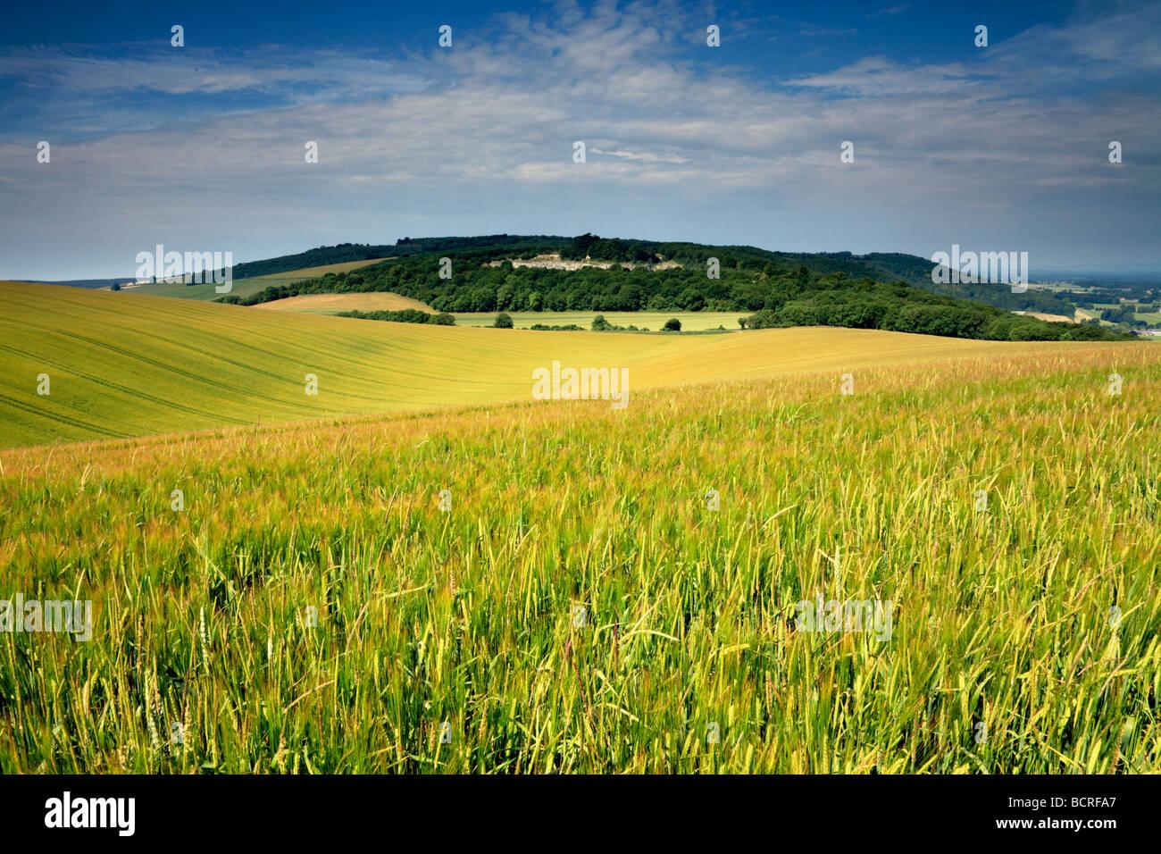 Duncton Woolavington abajo desde abajo, West Sussex Imagen De Stock