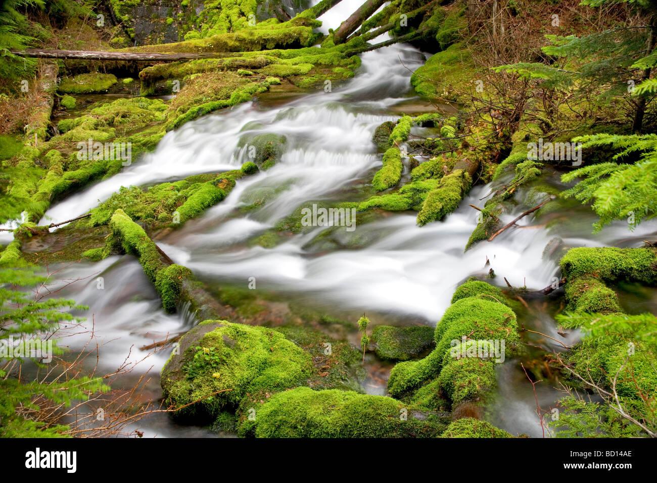 Big Spring Creek con rocas musgosas Gifford Pinchot National Forest Washington Imagen De Stock