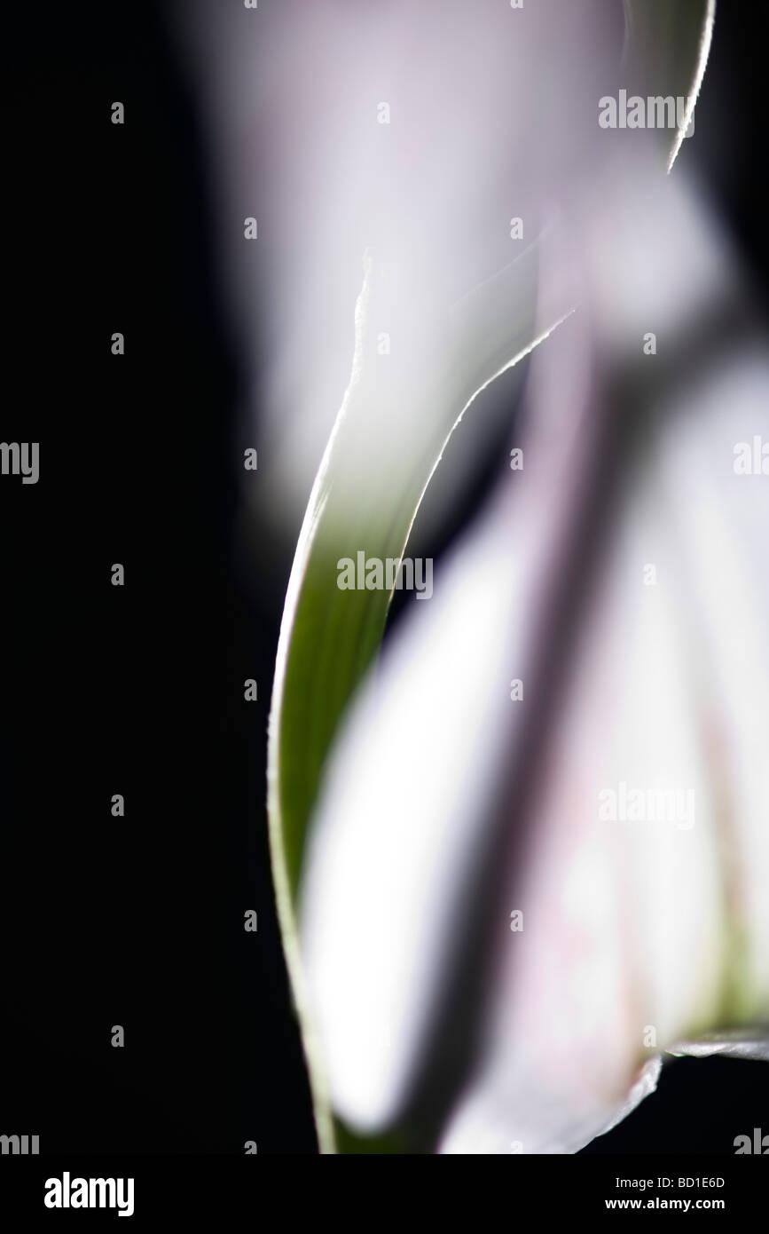 Tallo, flores de cerca Imagen De Stock