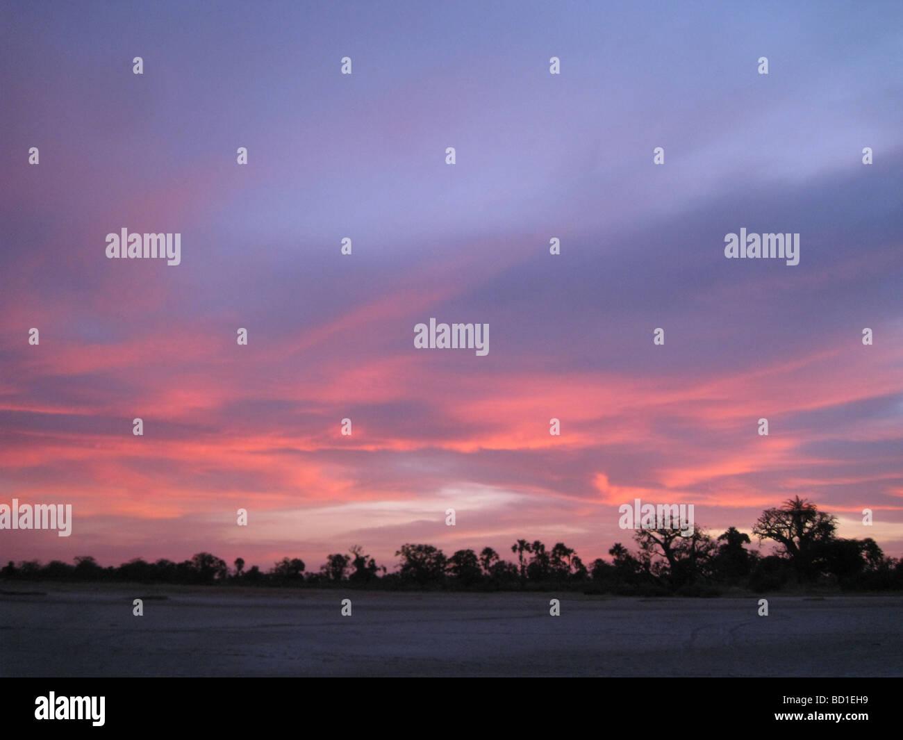 SENEGAL SUNSET - árboles de Baobab esbozadas contra el cielo nocturno Imagen De Stock
