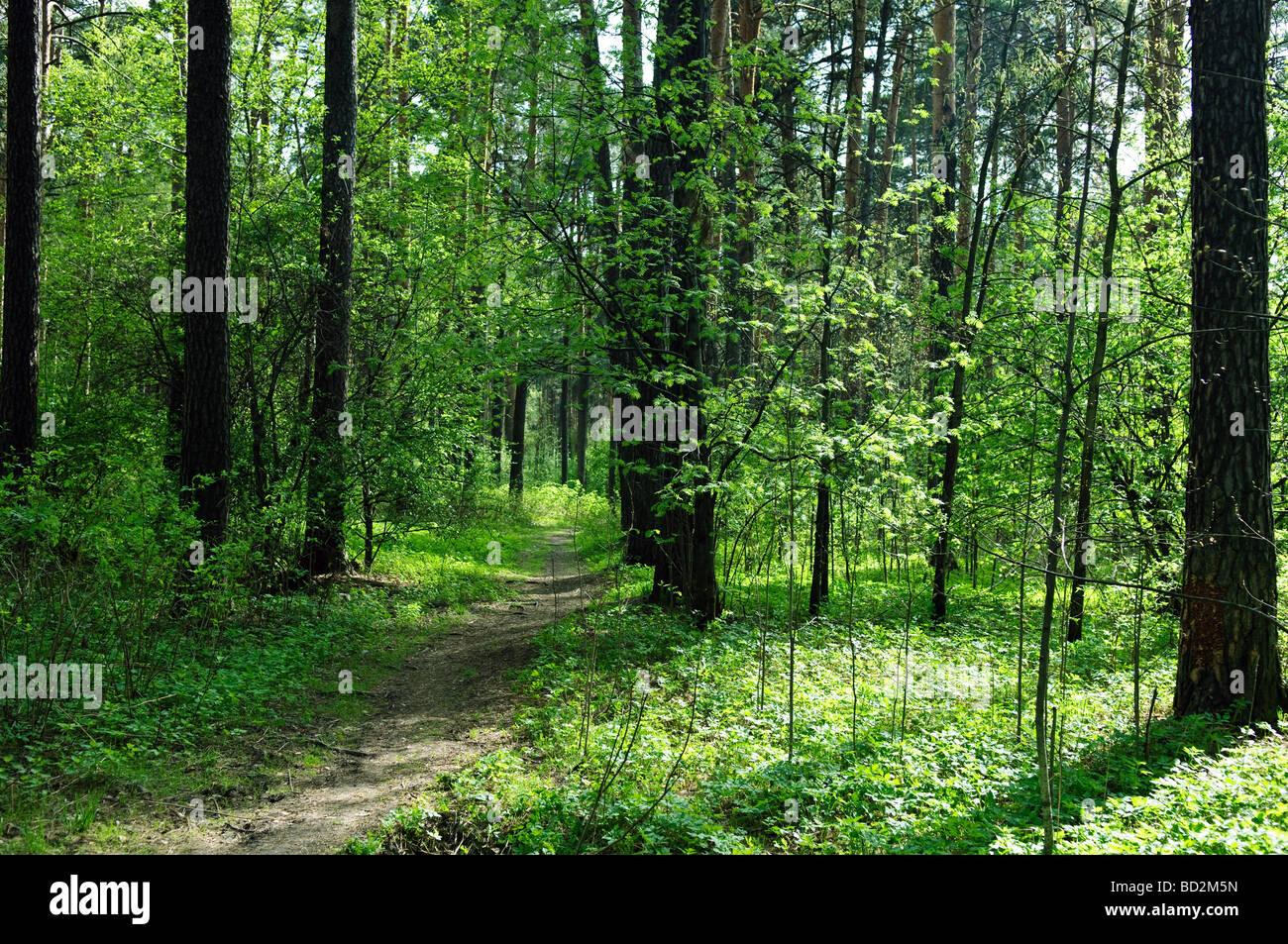 Bosque Caminata turística viaje por carretera horizontal horizontal Imagen De Stock
