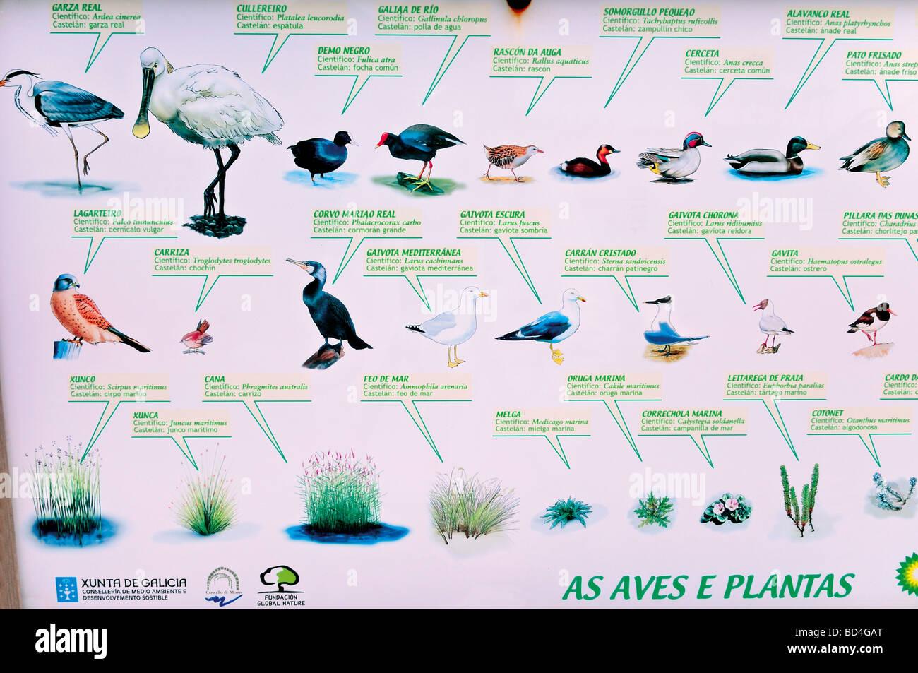España, Galicia: señal de información acerca de la fauna marina en el Parque Natural de Corrubedo Foto de stock