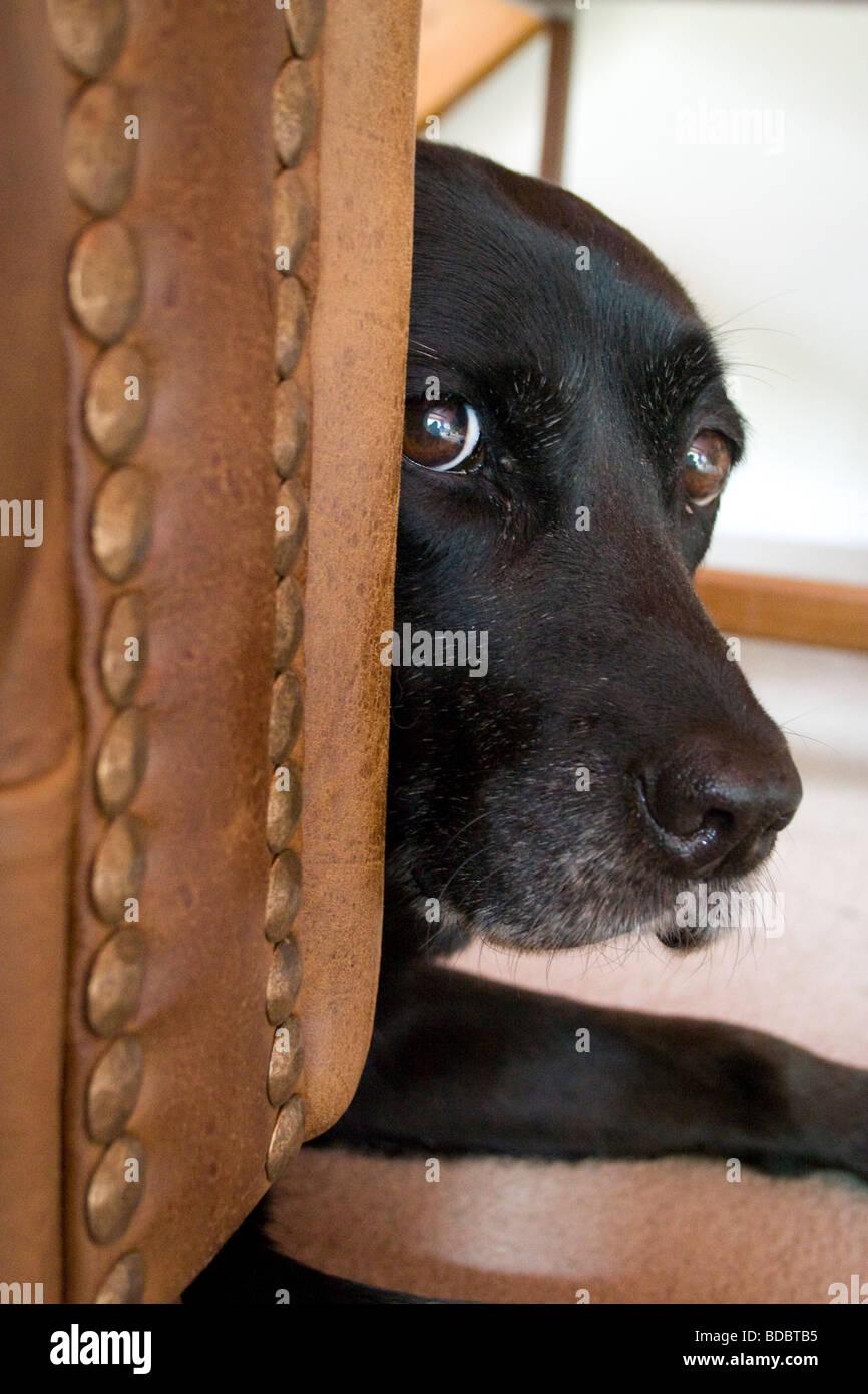 Perro tímido. Imagen De Stock
