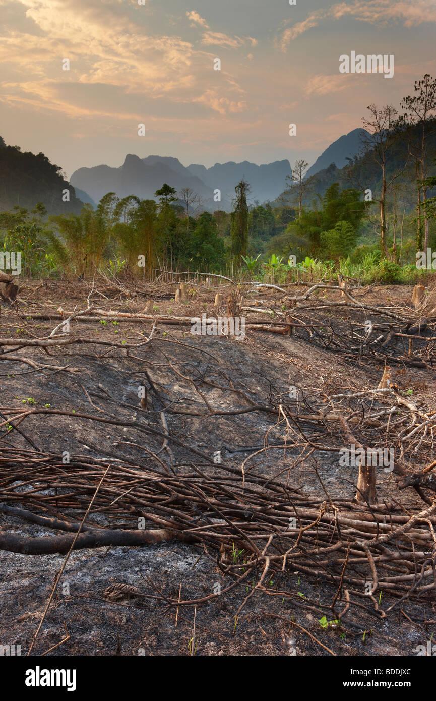 La tala y quema; de-forestación nr Vang Vieng, en Laos Imagen De Stock