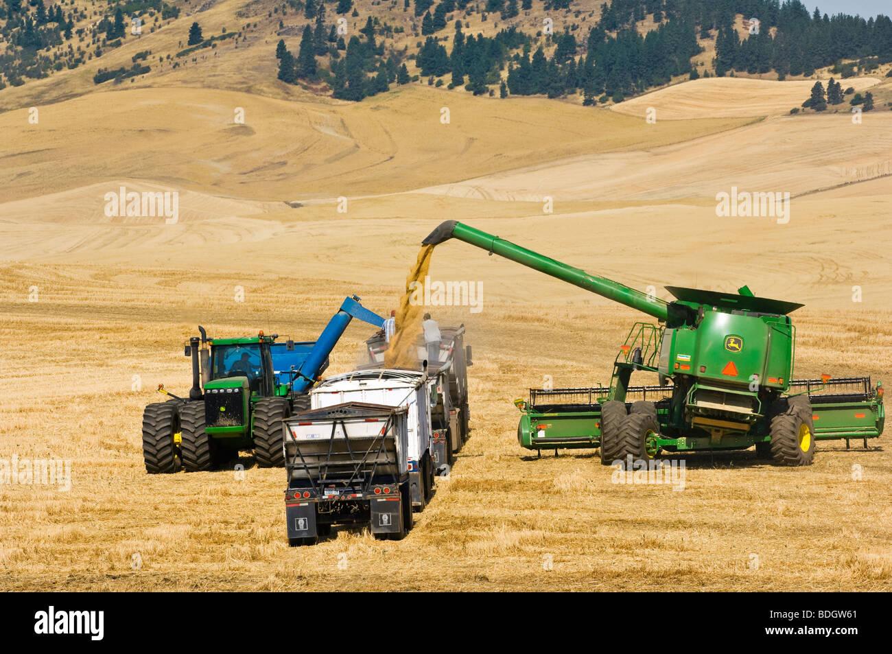 Una cosechadora y vagón de descarga de grano recién cosechado el trigo suave blanco en un camión para el transporte de grano a un elevador de granos / EE.UU.. Foto de stock