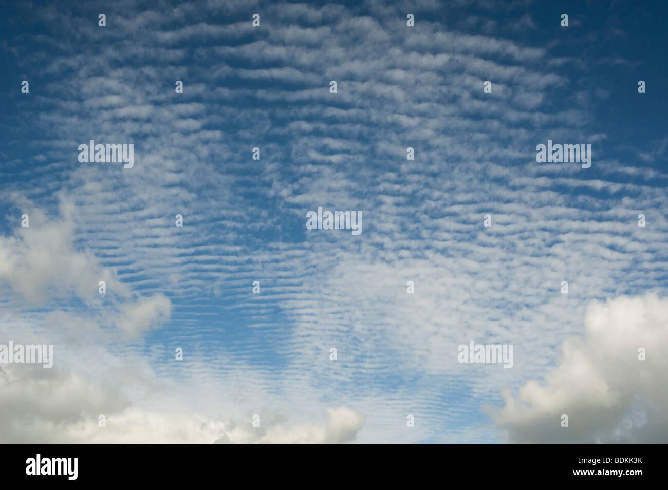 Altocúmulos undulatus nubes Foto de stock