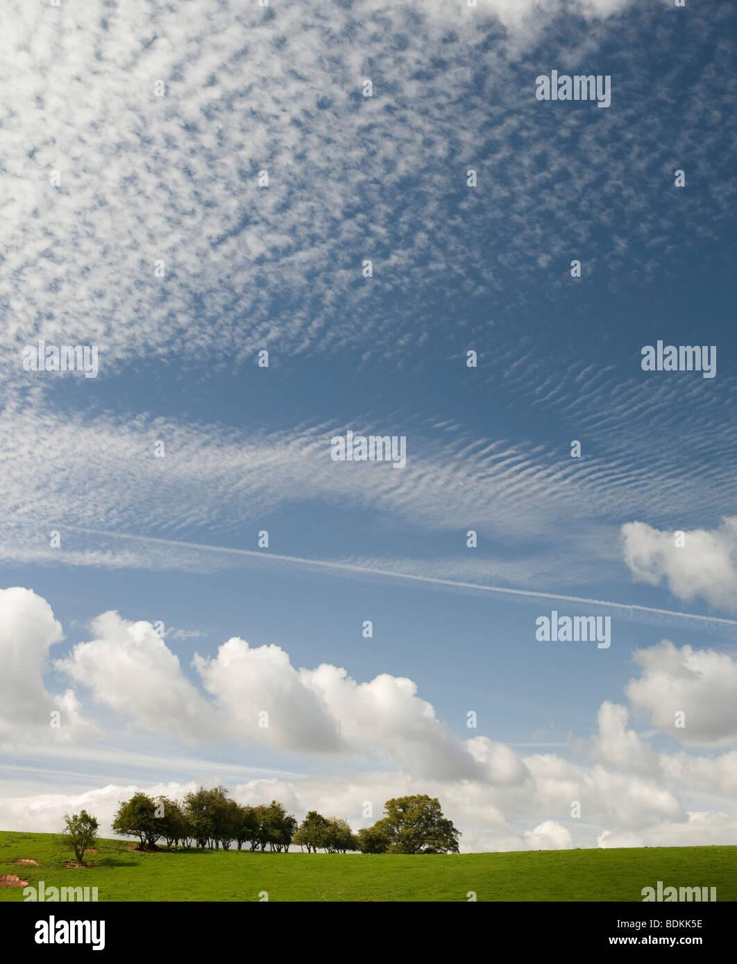 Shropshire Rural campo cerca de Ludlow, verde hierba, árboles y nublado cielo de verano azul Foto de stock