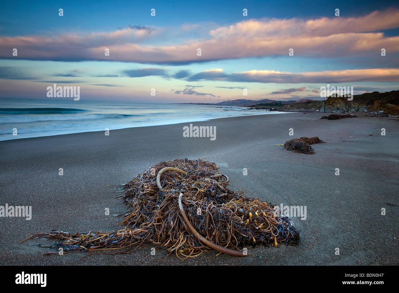 Murió de algas marinas y amanecer, Moonstone Beach, Cambria, Big Sur, California, Estados Unidos. Imagen De Stock