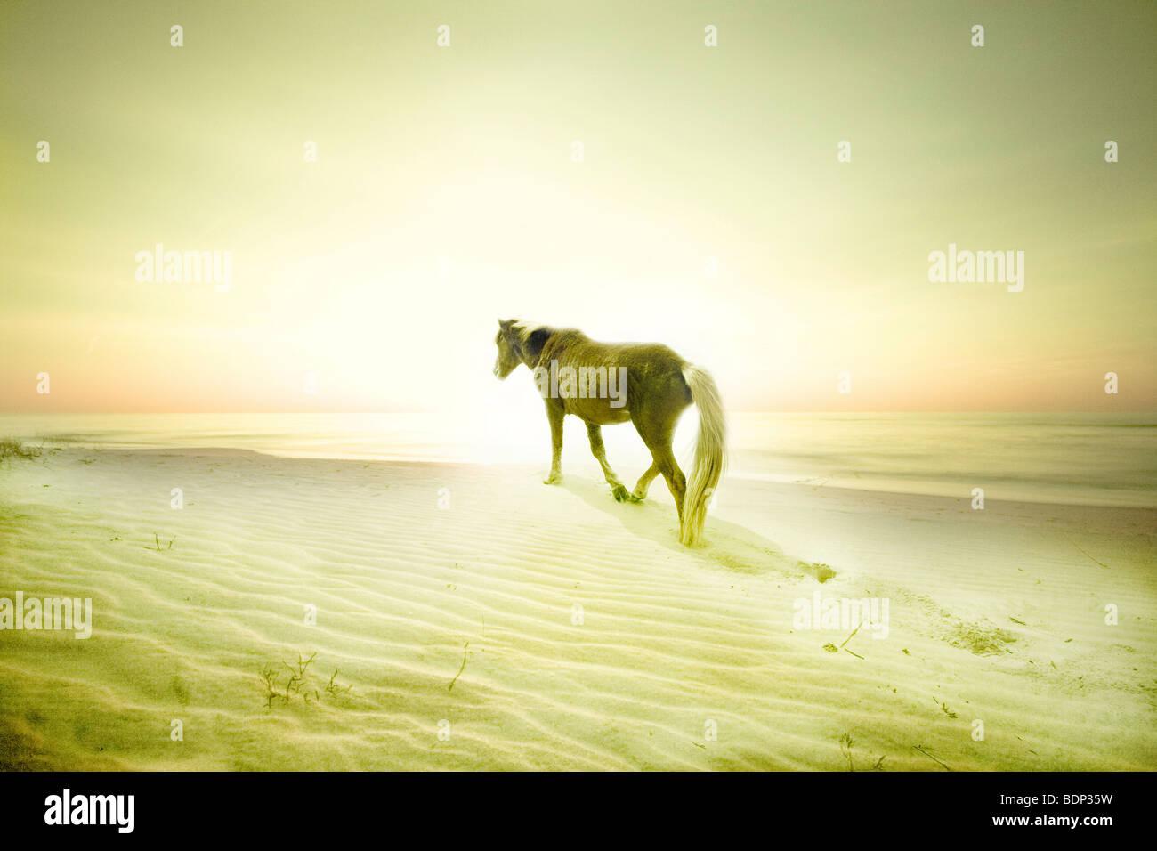Un pony en una playa de arena Foto de stock