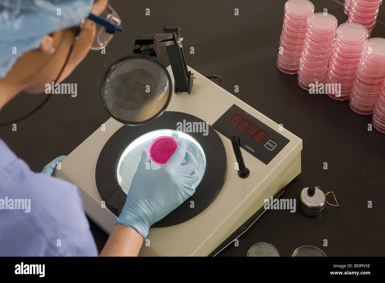 Investigadora examinar las colonias de bacterias en una muestra Foto de stock