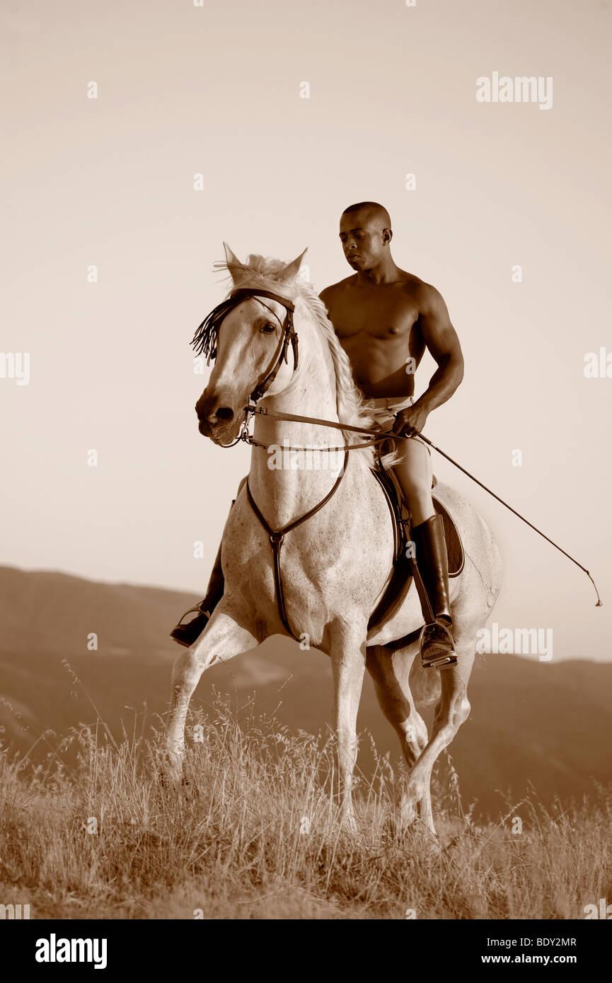 Caballo Blanco y negro Imagen De Stock