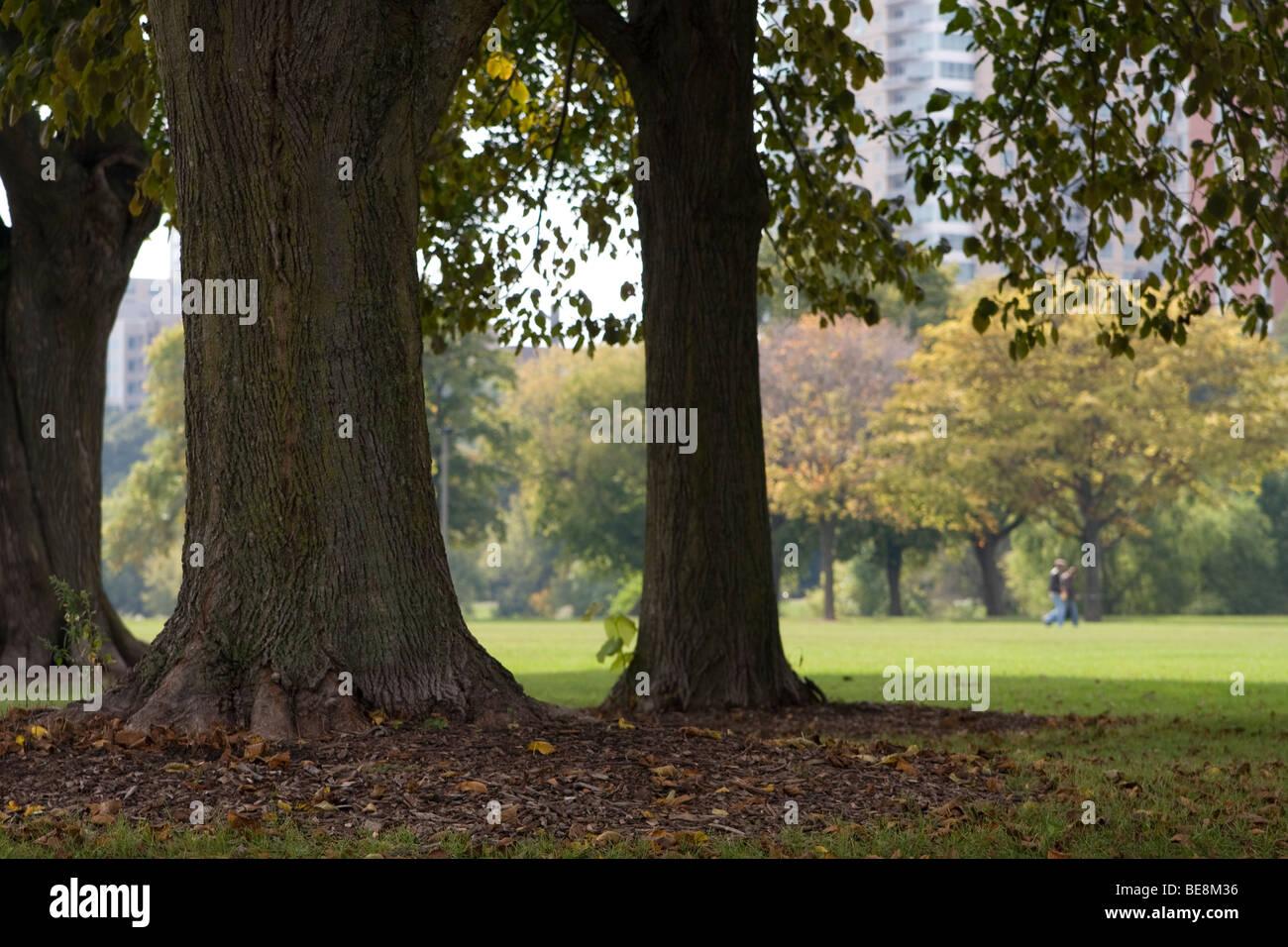 Los rboles dan sombra en una agradable tarde de otoo en un parque