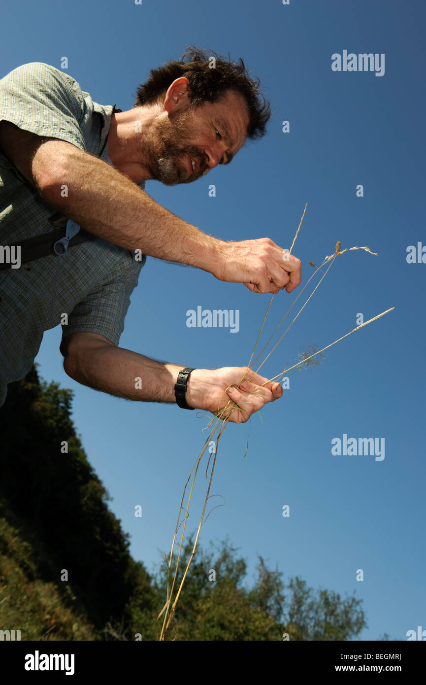 Consejo botánico con la campiña de Gales la celebración de distintos tipos de hierbas silvestres Imagen De Stock