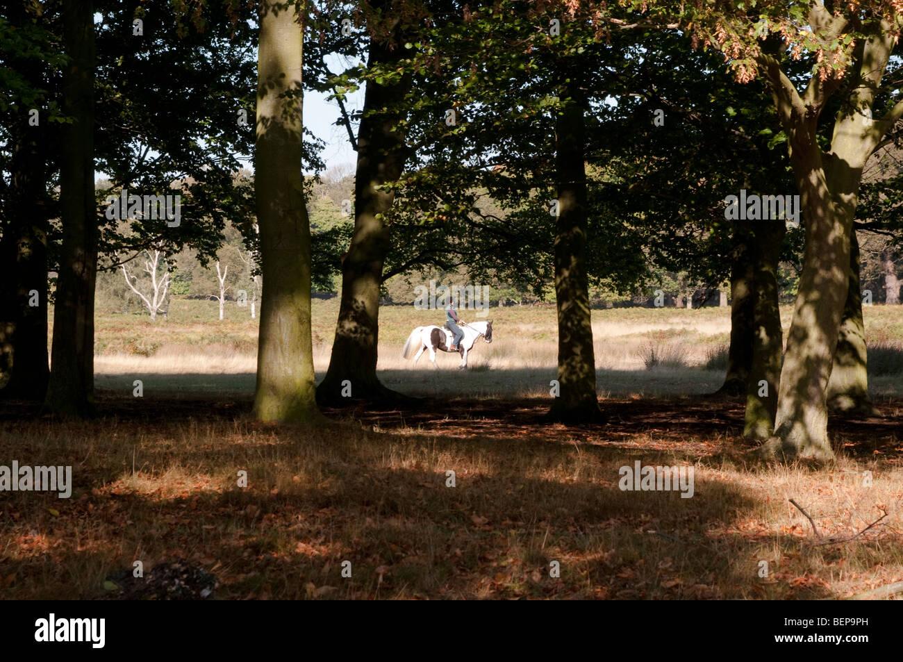 Jinete en Richmond Park Surrey UK Imagen De Stock