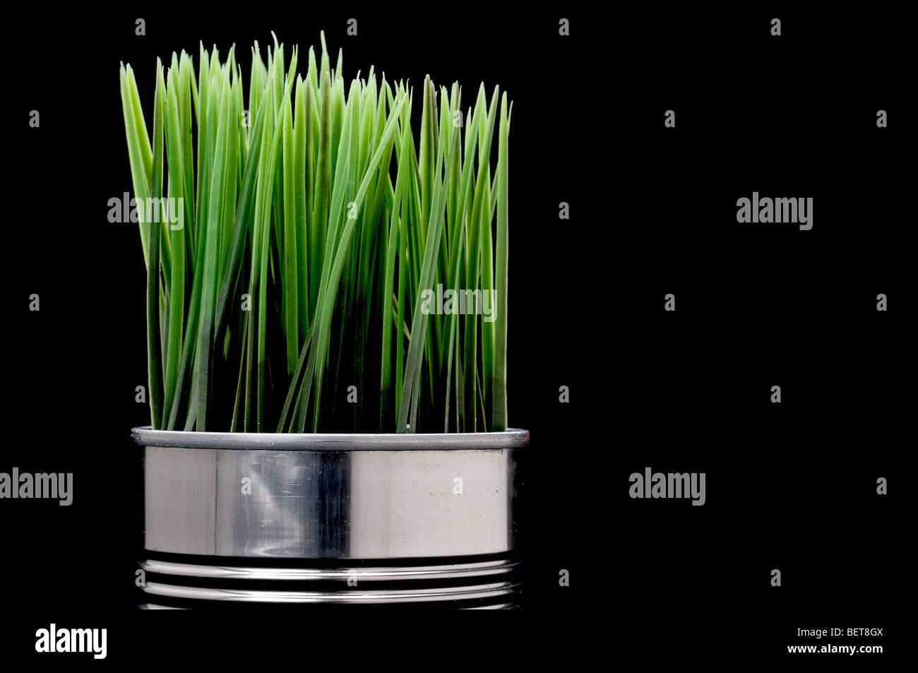 La pasto verde creciendo de una lata de aluminio reciclado Imagen De Stock