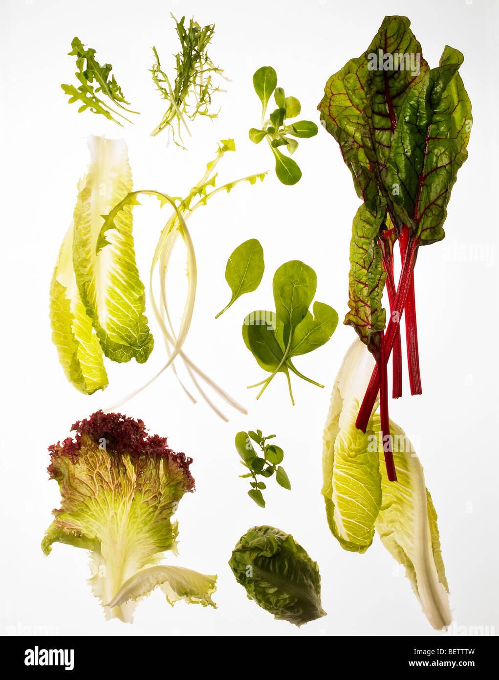 Ensalada de hojas verdes diferentes ingredientes, adecuado para ensaladas. Imagen De Stock