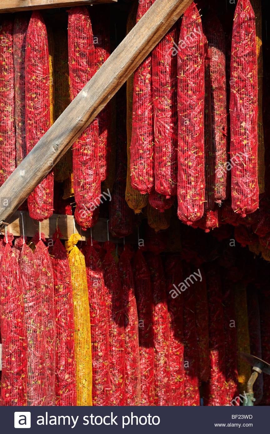 Capsicum annuum o ají secado al aire para hacer Hungarian Paprika - Kalocsa Hungría Imagen De Stock