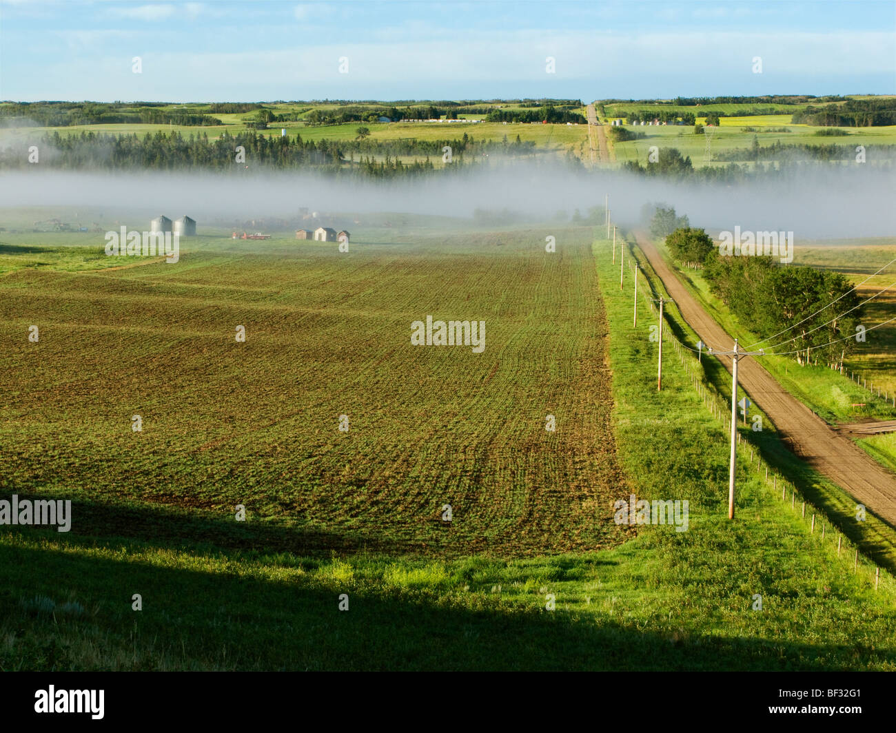 Un camino conduce al país grava el ciervo rojo Río y un crecimiento temprano de granos de cereal en el Imagen De Stock