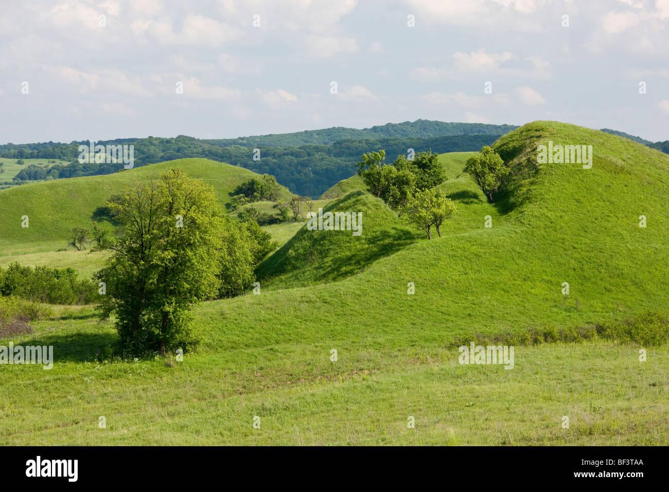 """Flores ricas en especies """"tumps"""" justo al sur de Saschiz, Transilvania. Imagen De Stock"""