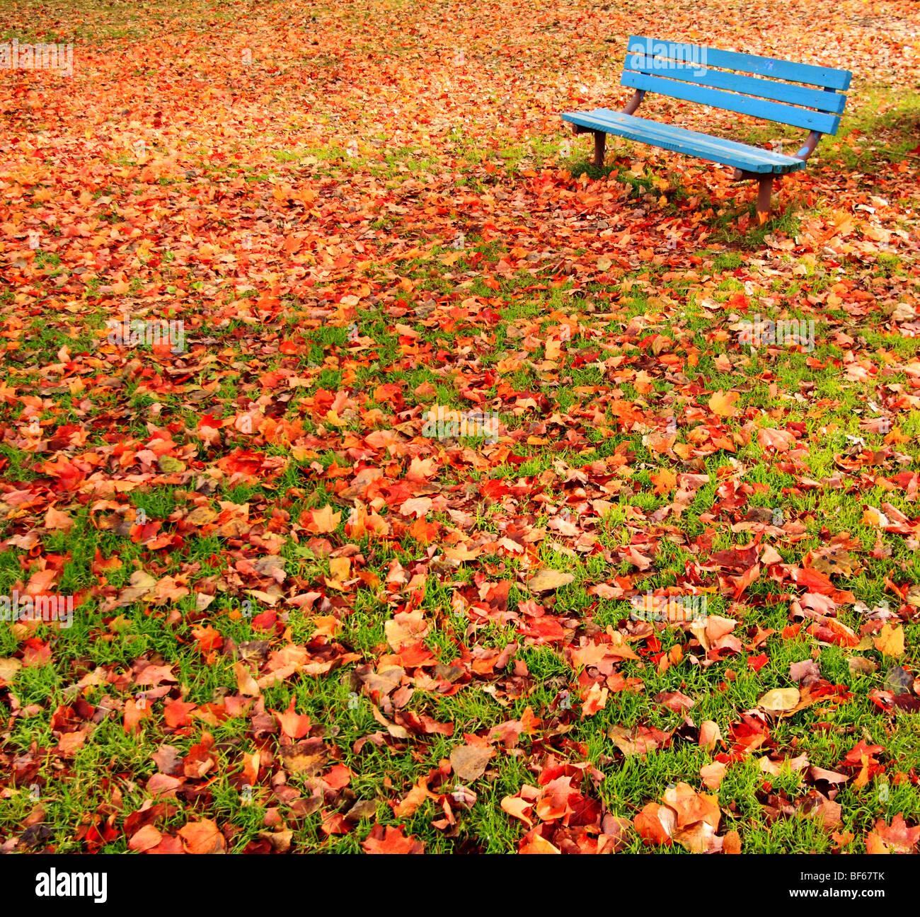 Un solitario, banqueta azul en un parque rodeado de hojas de otoño. Imagen De Stock