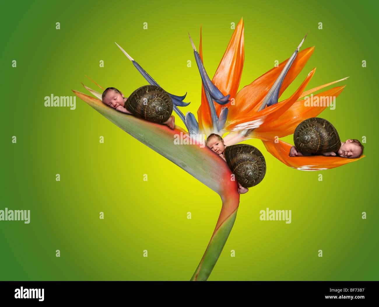 Tres pequeños bebés acostado sobre una flor. Imagen retrato surrealista Fantasía Imagen De Stock