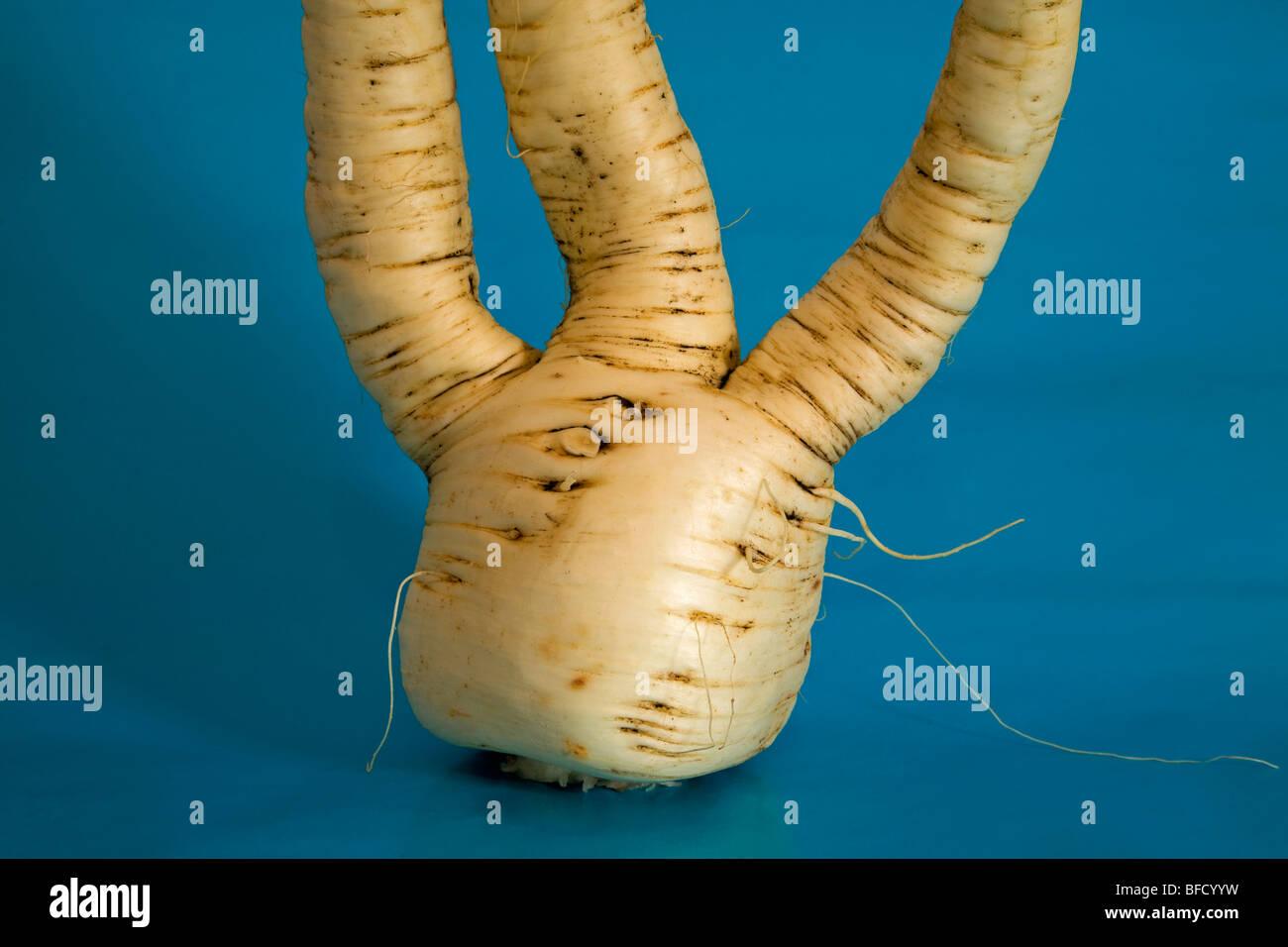 Un jardín común la alcachofa, vegatable de raíces y tubérculos Imagen De Stock
