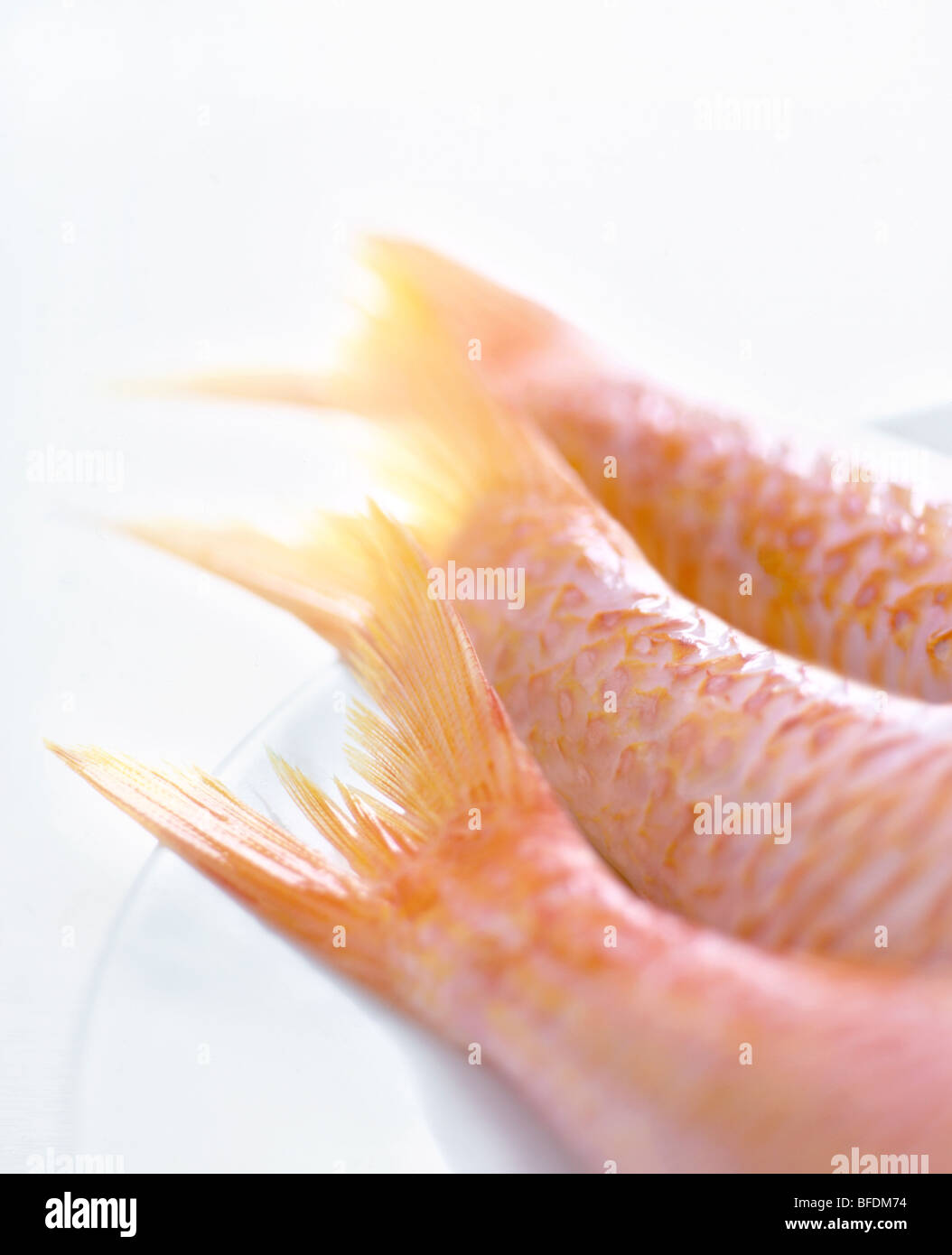 Colas de pescado Foto de stock