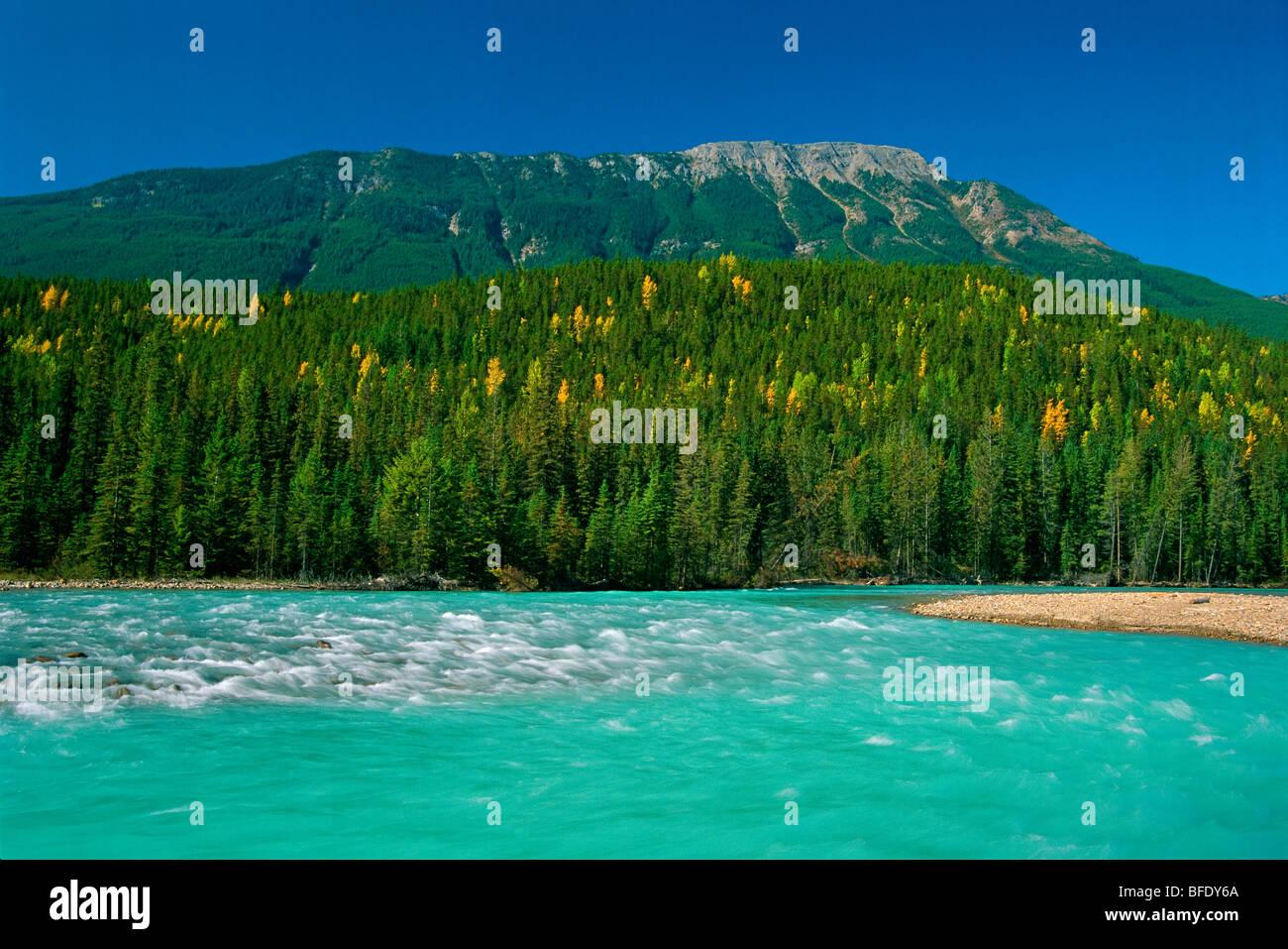 El Kicking Horse River, el Parque Nacional Yoho, British Columbia, Canadá Foto de stock