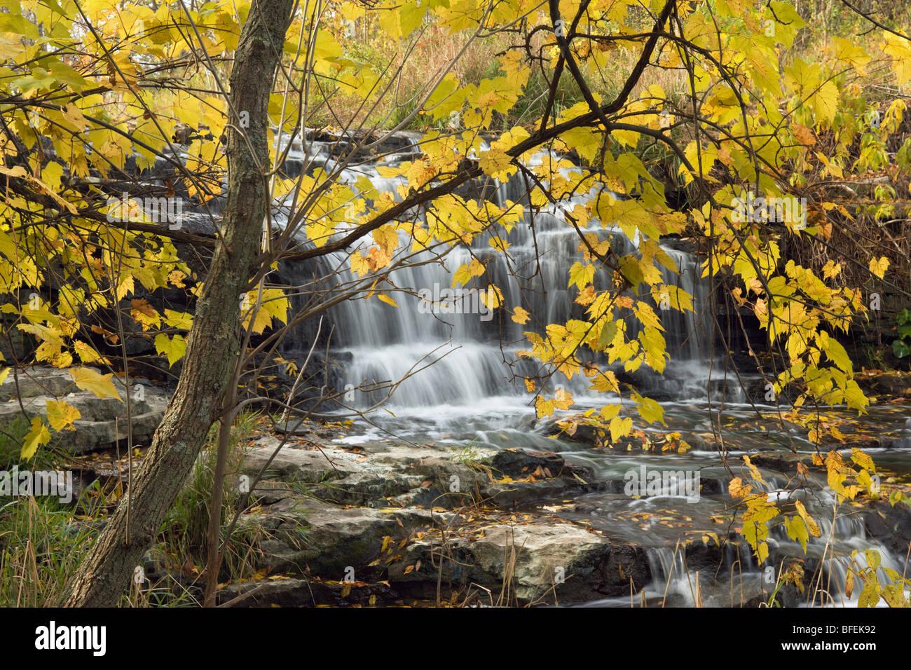 Quince millas y Martins Creek Falls, Rockway, Ontario, Canadá Imagen De Stock