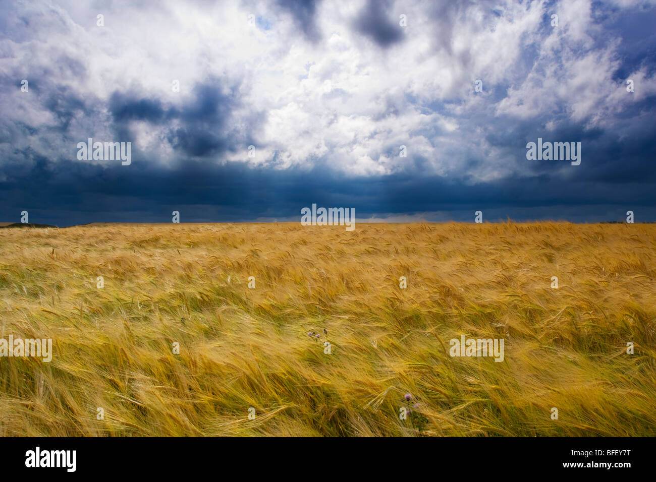 Tormenta moviendo a través de campo de grano, Ridge Road 221, Alberta, Canadá, cloud, el clima, la agricultura Imagen De Stock