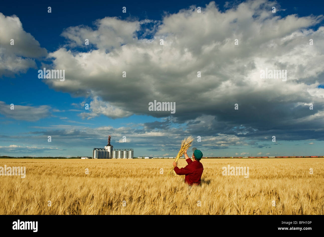 El hombre busca la cebada madura con un terminal de granos del interior y el desarrollo de los cúmulos de nubes Imagen De Stock